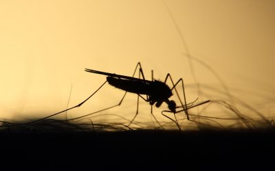 Így lesz elviselhetőbb a szúnyogcsípés