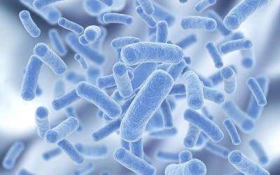 Probiotikumok: ártanak?