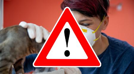 Veszélyes tévhit terjed: állatgyógyászati készítményeket keresnek a koronavírus ellen